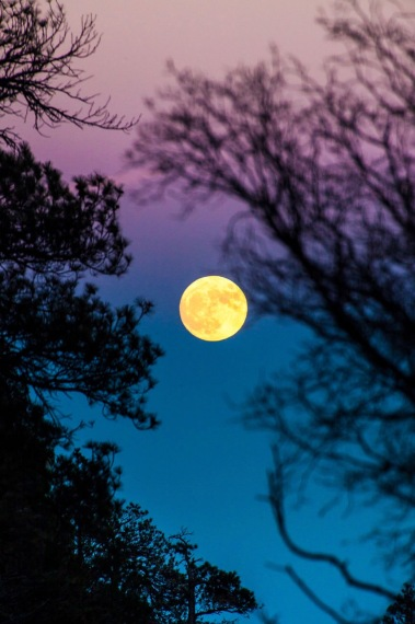 TYLER-LEAVITT_supermoon1